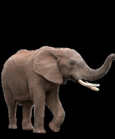 Datei:Elefant2.png