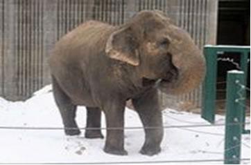 Datei:Lucy the elephant.jpg