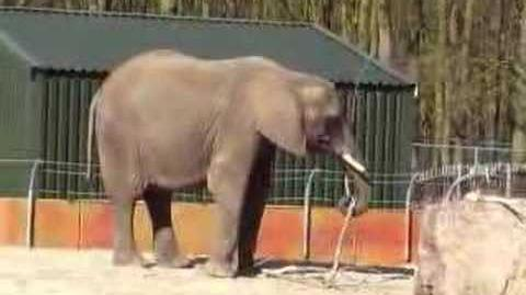 Duna of Ouwehands Zoo