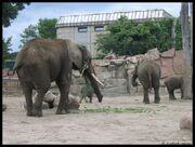Tierpark Berlin4.jpg