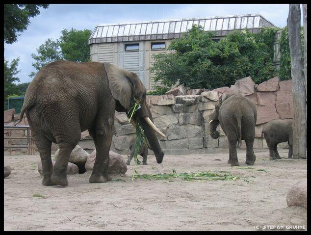Datei:Tierpark Berlin4.jpg