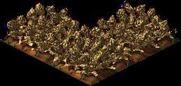 Artichoke4