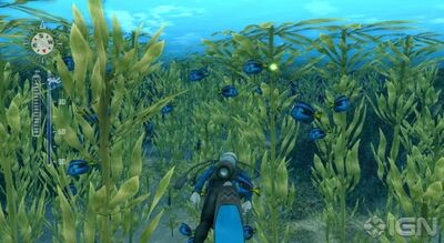 Blue tang 1