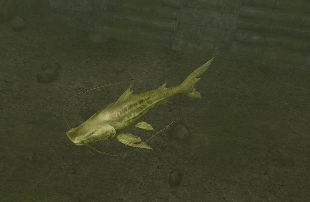 File:Golden Catfish.jpg