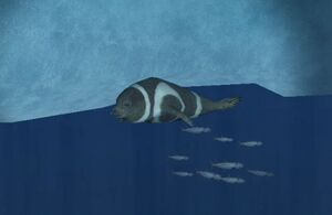 Ribbon seal swimming