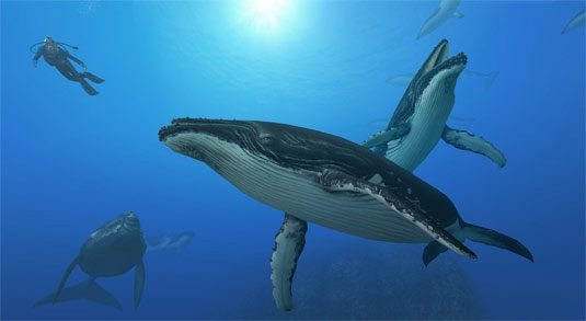 File:Whalesanddiver.jpg
