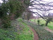 -North bank of outer bailey Deddington Castle