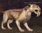 A tenacious sabertooth