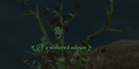 A withered odeum