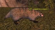 A rugged-fur scrapper