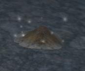 A mushroom cap