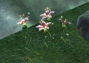 Wuoshi plant