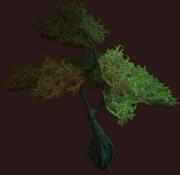 Golden Vesspyr Willow (Placed)