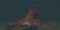 A Coldwind octopus