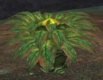 File:Race carnivorous plant.jpg