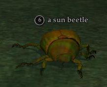 File:Sun beetle.jpg