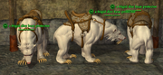 Dire Bear (Mystic) Placed
