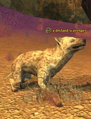 A dryland scavenger