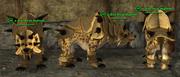 Dire Bear (Templar) Placed