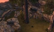 Scar Pines