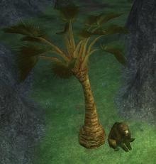 Ancint Sands Palm