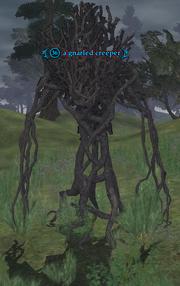 A gnarled creeper