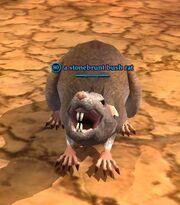 A stonebrunt bush rat