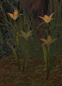 File:Maraflowers.jpg