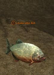 A bonecutter fish