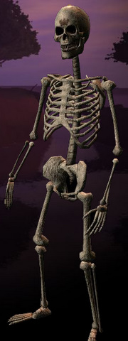 File:Race skeleton.jpg