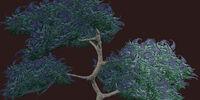 Lavender Vesspyr Oak