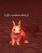 A sootfoot rabbit