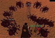 Deathsilk spider2