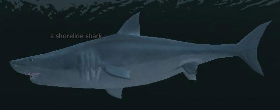 File:A shoreline shark.jpg