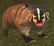 A grizzled badger