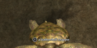 A leathershell snapper