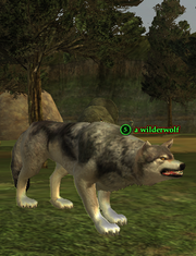 A wilderwolf