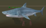A daggertooth shark