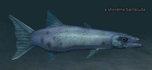 File:A shoreline barracuda.jpg