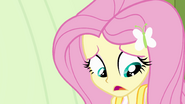 "Fluttershy ""it doesn't really belong to you either"" EG"
