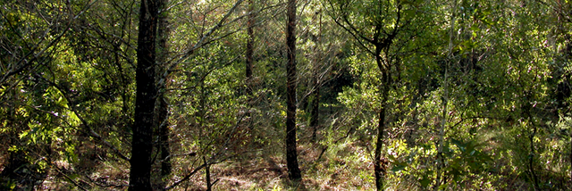 File:Forest panorama.png
