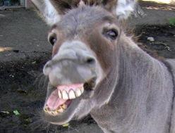 File:Angry-donkey.jpg