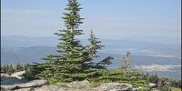 Wolf Plaza/Crest Hill/Crest Peak