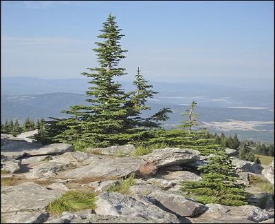 Crest Peak