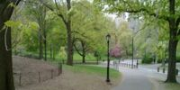 Liberty Park/Looped Path (Loop)