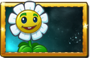 Marigold New Premium Seed Packet