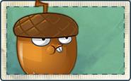 Hazelnut Seed Packet