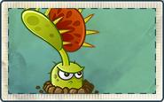 Venus Flytrap Seed Packet