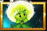 Dandelion New Premium Seed Packet