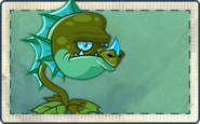 Water Dragon Seed Packet